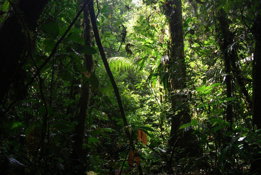 jungle 240498 1920